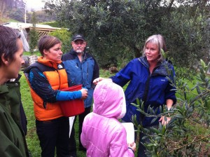 Maree introducing us to the art of olive harvesting. Not just any old olive will do!